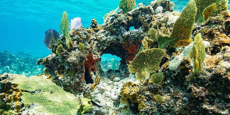 Bimini Reefs
