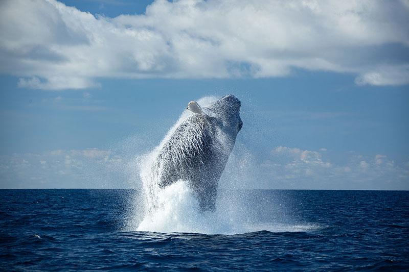 WildQuest_Whale_Retreat_2019-188
