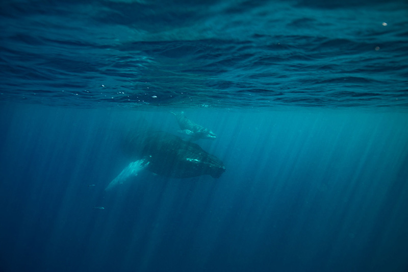 WildQuest_Whale_Retreat_2019-217