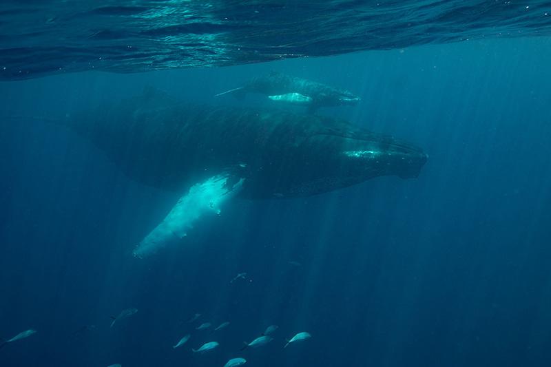 WildQuest_Whale_Retreat_2019-218