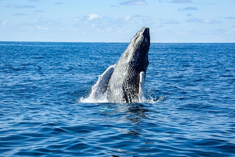 WildQuest_Whale_Retreat_2019-87