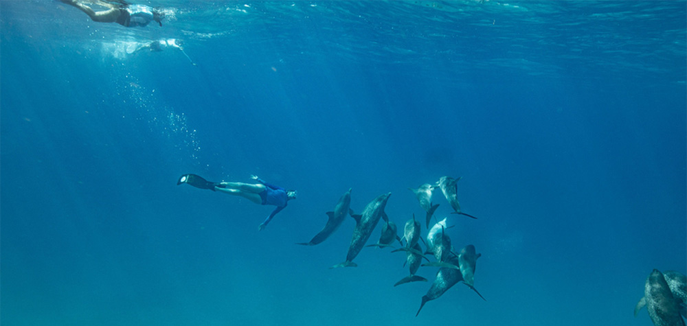 Allison Stillman diving in the ocean with a pod of dolphins