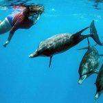 Allyn Evans dolphins