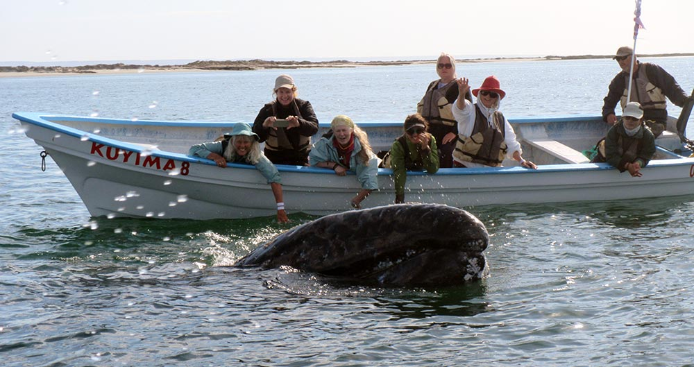 Anne with gray whales