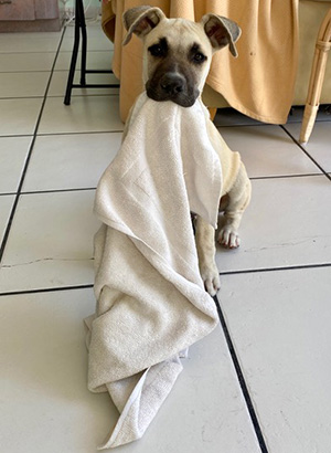 puppy sitting on the floor with blanket