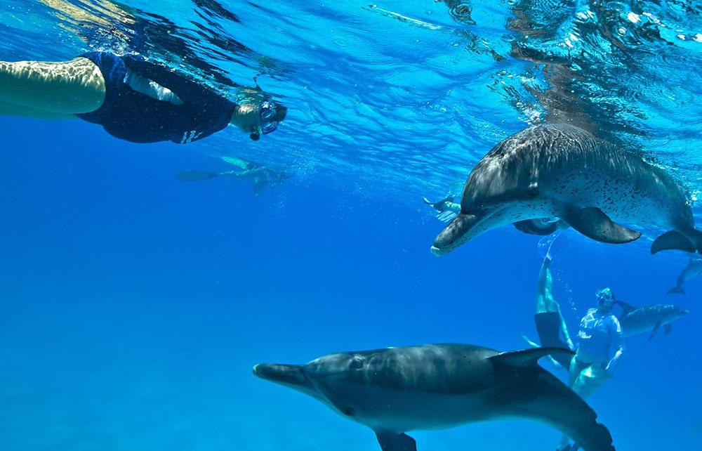 Susanna with dolphins