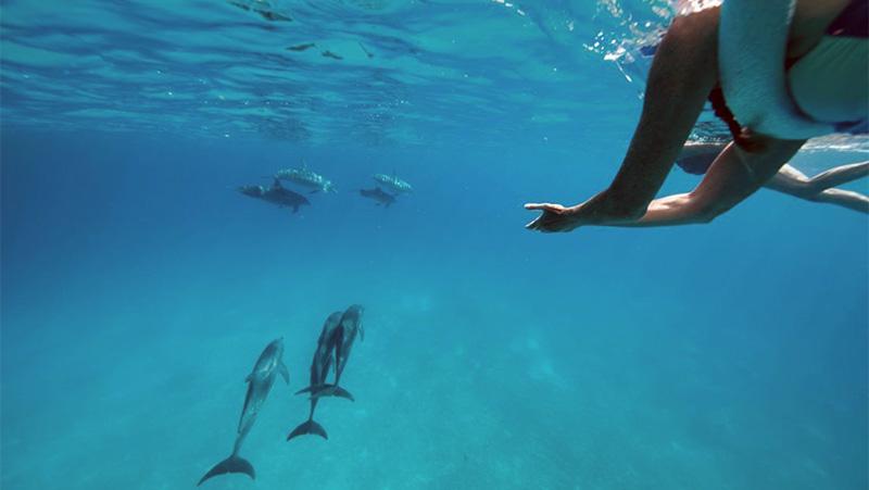 Deborah Reiki Dolphins
