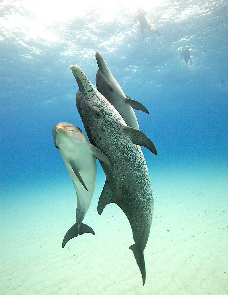 Dolphin Pose