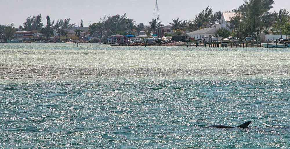 Dolphin Welcome Bimini