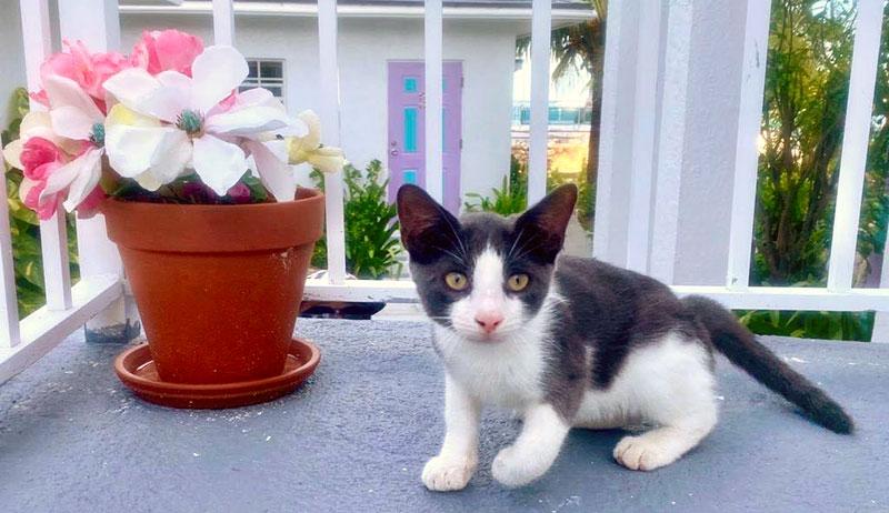 kitten sitting next to a plant pot