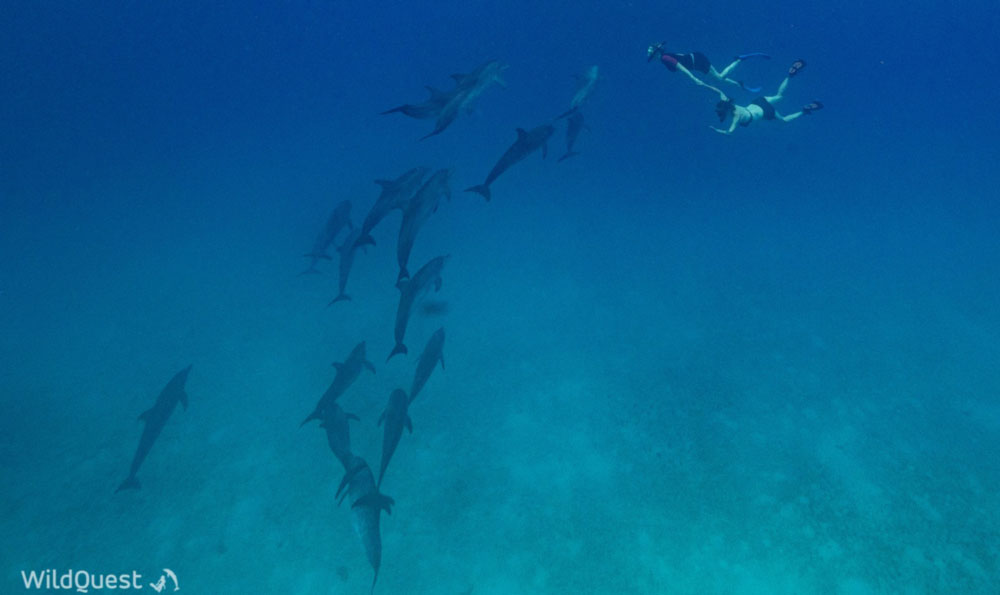 Kate swimming with wild dolphins