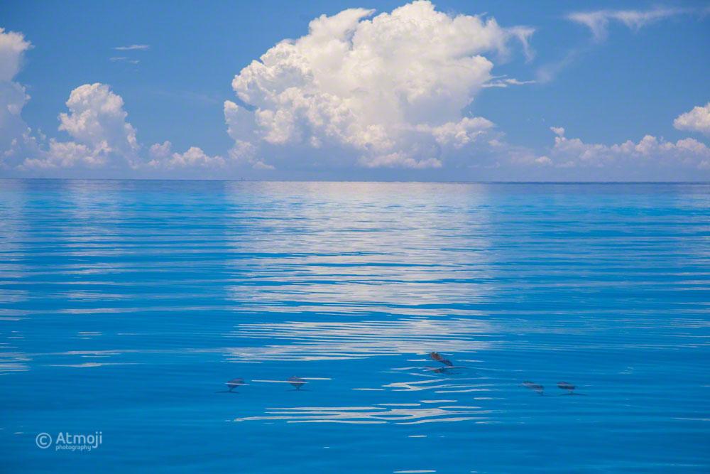 Ocean Bimini