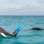 Woman sitting on boat, dolphins waiting for her to jump in