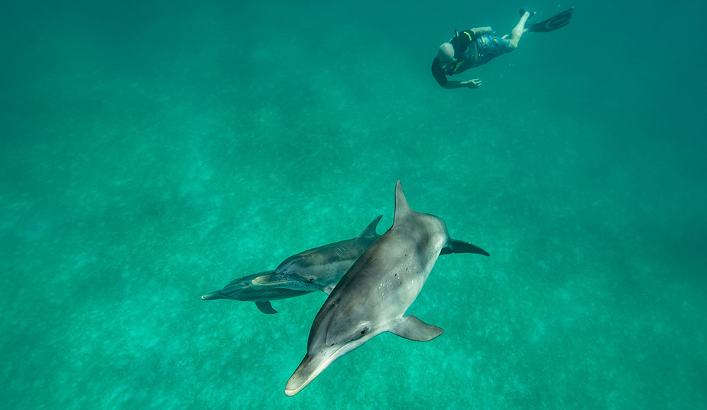 Rob Israel and the dolphins