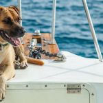 Dog Sandy the dog sitting on the boat in the ocean