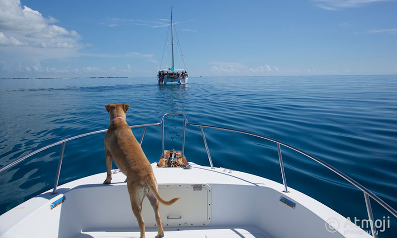 Dog Sandy on the little boat watching the big boat