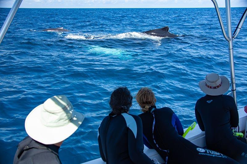 WildQuest Whale Watching